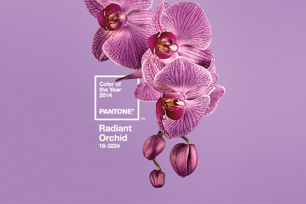 pantone orchid