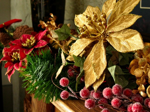 Red and gold poinsettias with pine branch and berries