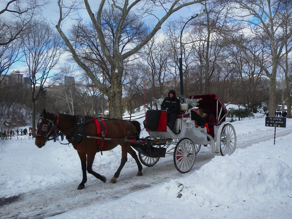 Couple riding in horse drawn carriage on snowy road