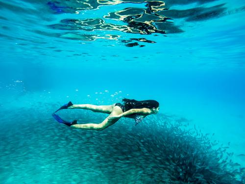 woman swimming underwater near school fish