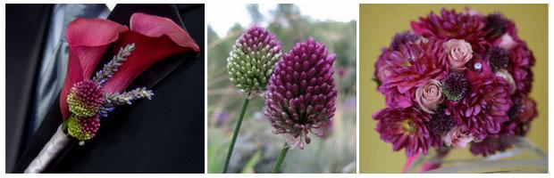 Allium Wedding Flowers