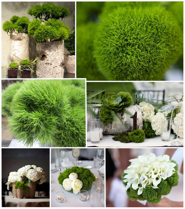Green Trick Dianthus Inspiration Board