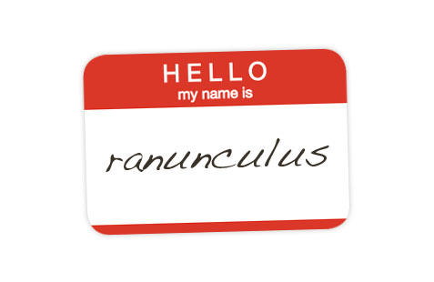Hello, my name is Ranunculus.