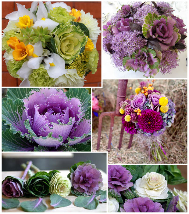 Ornamental Cabbage Board